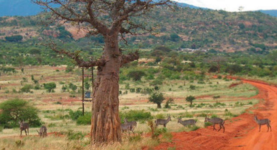Viaggi in 4×4 in Africa, con le guide di Travel Revolution