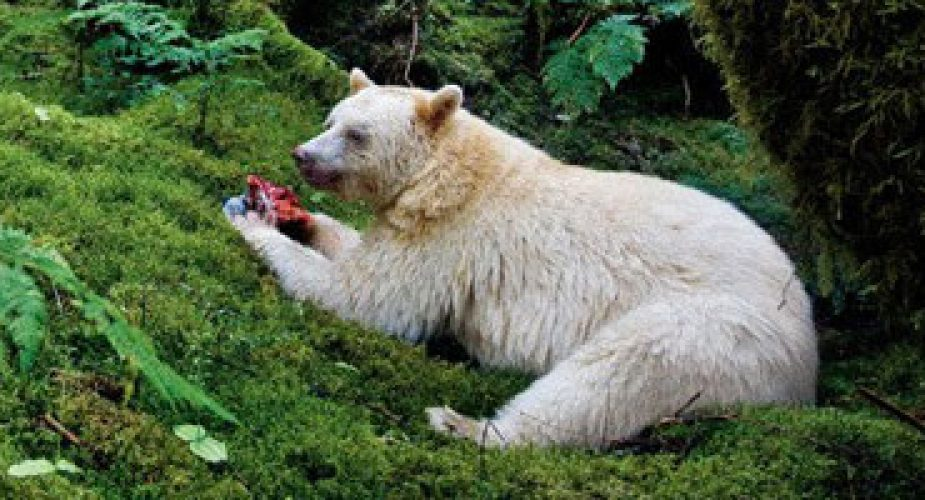 viaggi_canada_spirit_bear_lodge