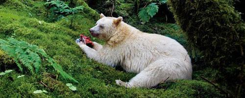 viaggi canada spirit bear lodge
