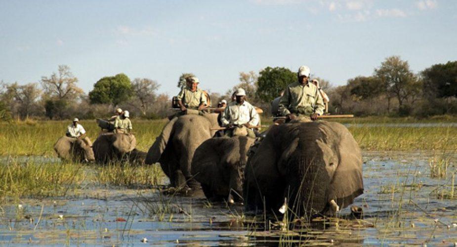 safari selfdrive in africa australe