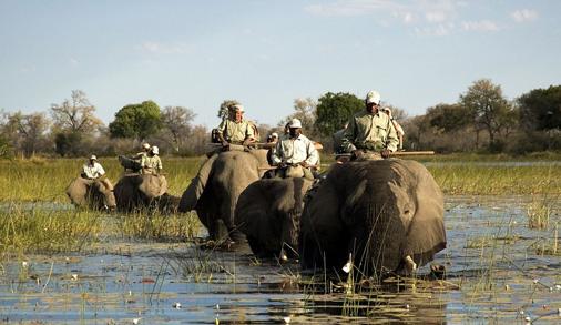 safari in africa viaggi di nozze
