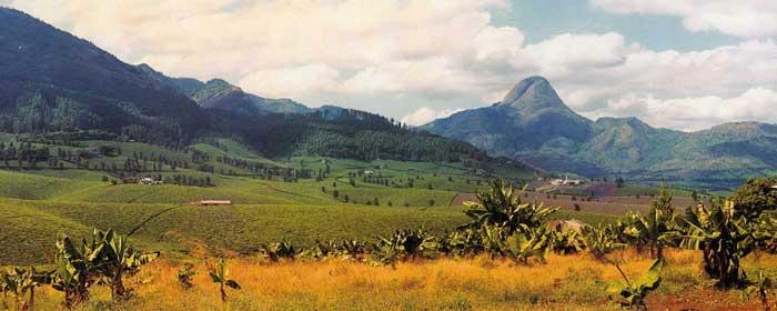 safari africa costa occidentale