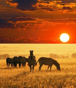 africa travel sun city