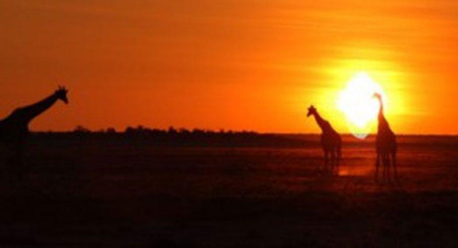 etosha-national-park-namibia